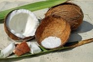 coconut meat
