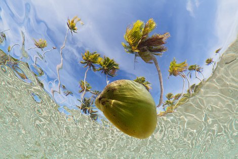 Coconut-floating-in-shallow-lagoon-with-coconut-palms-in-the-background-shot-from-underwater