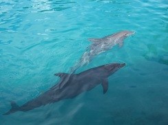 dolphins-727091