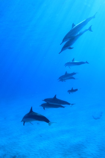 dolphins-788178