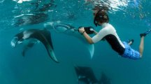 Manta ray snorkeling excursion