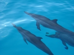 dolphins while cruising