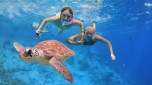 turtle while snorkeling tour
