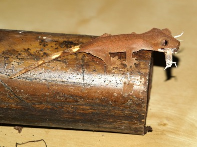 crown-gecko-1302345_1920